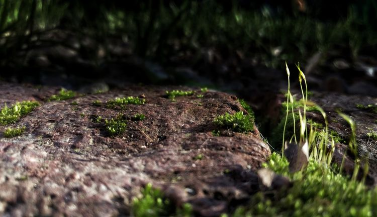 Argentina Photography Light And Shadow Nature EyeEm Selects Beauty In Nature Freedom Abstract Verdin Focus On Foreground Forest Life Backgrounds Wallpaper Scenics - Nature Scenics Screen Landscape Low Angle View Love Moss Close-up Grass Plant Woods