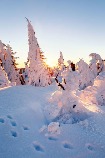 Snow Winter Cold Temperature Beauty In Nature Sky Nature Covering No People Tranquility White Color Scenics - Nature Tranquil Scene Field Day Frozen Deep Snow Land Sunlight Outdoors Powder Snow Snowcapped Mountain Harzmountains Harz