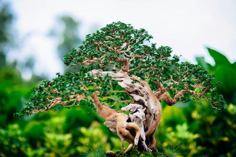 Bonsai tree growing against sky