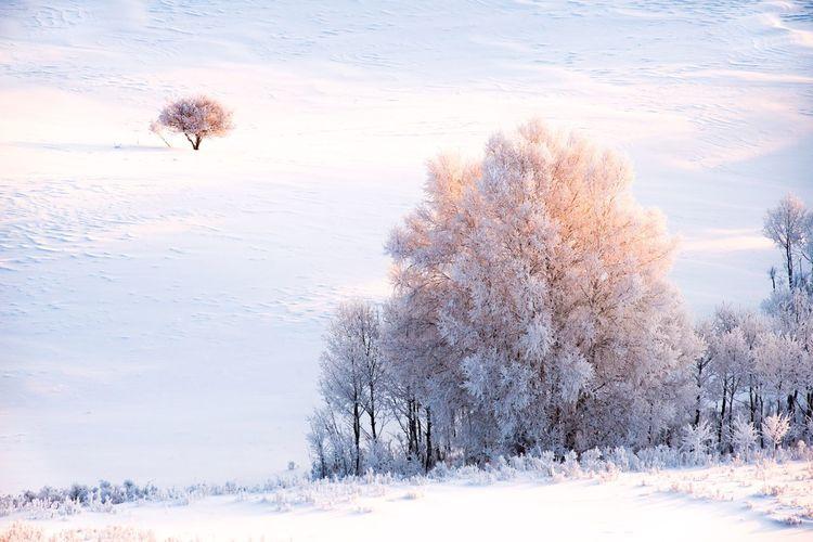 拍摄于乌兰布统 Snow Winter Cold Temperature Nature Beauty In Nature Landscape Tree Outdoors Tranquility Scenics Day No People Animal Themes Sky Mammal