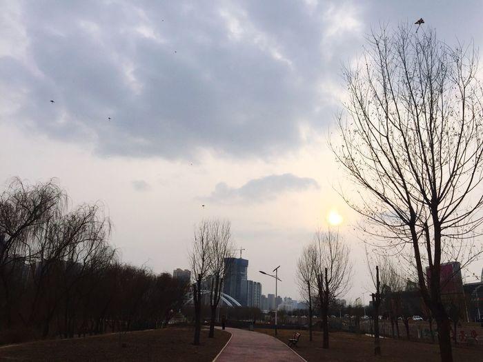 Flying away. Sky Tree City Outdoors Cloud - Sky Nature