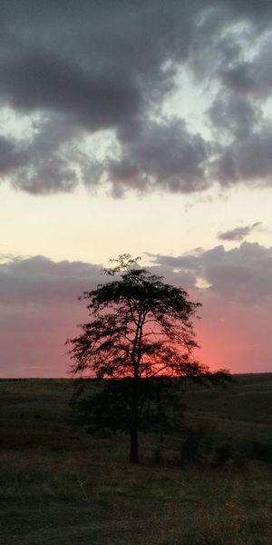 Tree Pixelated Sunset Silhouette Sky Landscape Cloud - Sky
