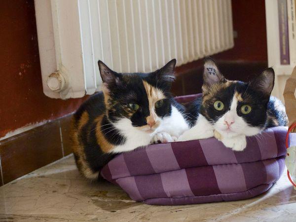 Cats Domestic Cat Portrait