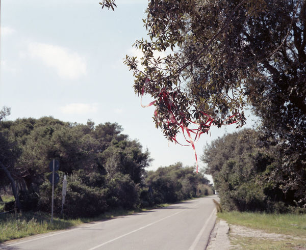 120 Film Analogue Photography Beauty In Nature C-41 Developed #photographer #colorfilm  Country Road Day Empty Road Landscape Nature No People Non-urban Scene Road Road Marking Scenics The Way Forward Tree Vanishing Point