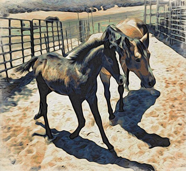 Horse Rural Scenes Frisky NEM Painterly