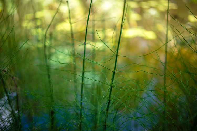Strömforsin Ruukki Horsetail Reflection Riverside Wood Beauty In Nature Botany Close-up Day Field Forest Grass Green Color Growth Horsepine Lake Meadow Nature No People Outdoors Tranquility Water