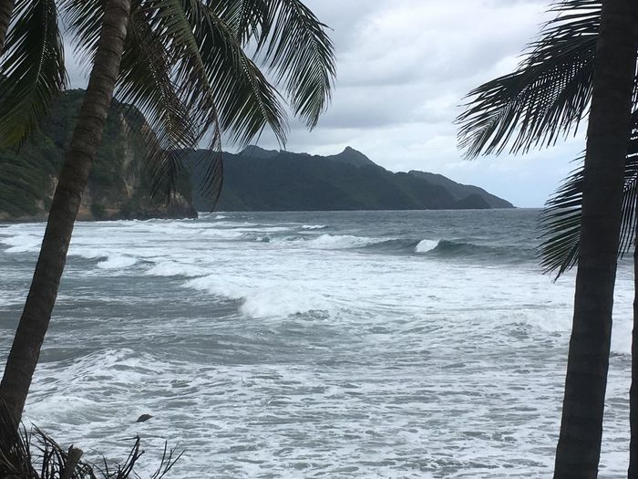 Dominica Beach Beauty In Nature Day Nature No People Outdoors Palm Tree Scenics Sea Sky Tree Water Wave