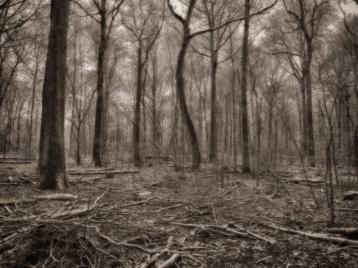 WelwynGardenCity Commonswood Black & White HDR Woodland Walks Walking Around