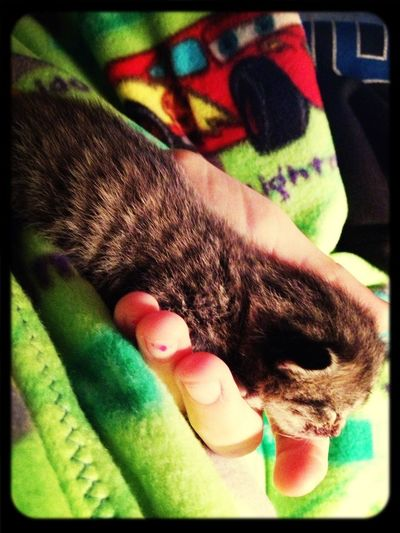 My rescued kitten I'm trying to save!❤