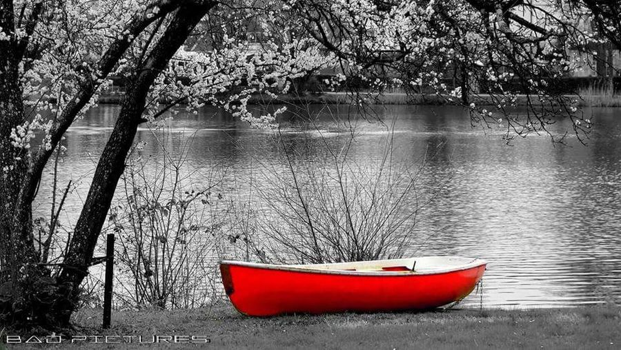 Water No People Tree Nautical Vessel Day Outdoors Red Nature Lake Tranquility Beauty In Nature Close-up Sky Blackandwhiteandcolor Boat Badwaldsee Germany🇩🇪