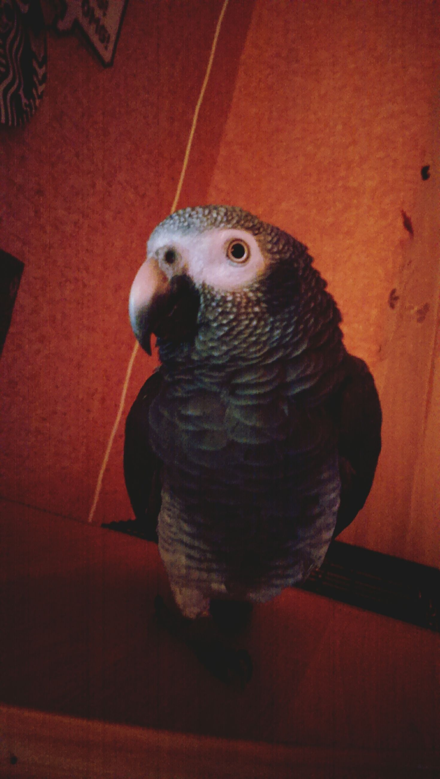 animal themes, one animal, indoors, wildlife, portrait, animals in the wild, looking at camera, bird, close-up, animal head, animal representation, pets, no people, sitting, domestic animals, home interior, full length, toy, looking