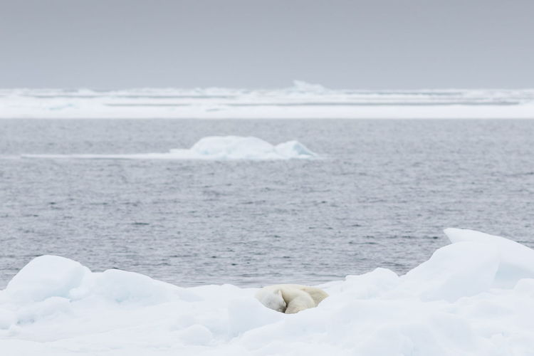 Polar bear sleeping on ice by sea against sky