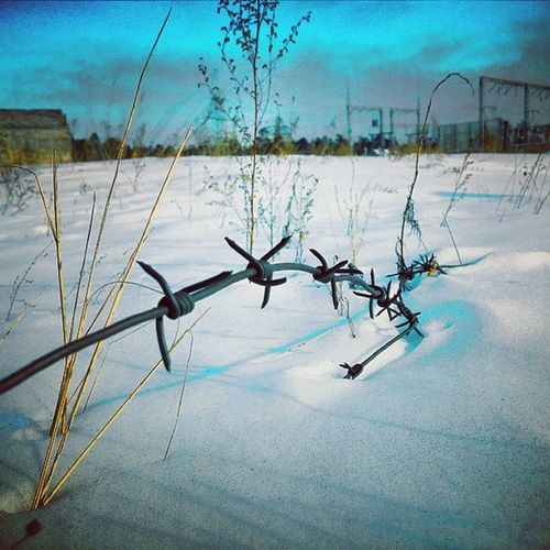 Stacheldraht Barbedwire Winterlandschaft Winterscape bluesky himmelblau колючаяпроволка неягоза сибирь ангарск siberia infebruary angarsk