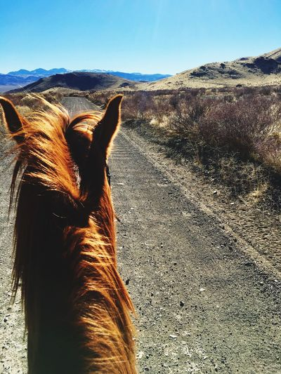 Free Nevada Horses Horse Riding Day Domestic Animals Mountain Mammal Animal Themes One Animal Sky Nature No People Outdoors Sunlight Beauty In Nature Landscape Brown