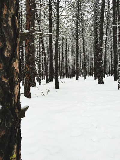 Ice Age Snow Winter Cold Temperature Tree Trunk Tree Forest Nature White Cold Outdoors White And Black Black