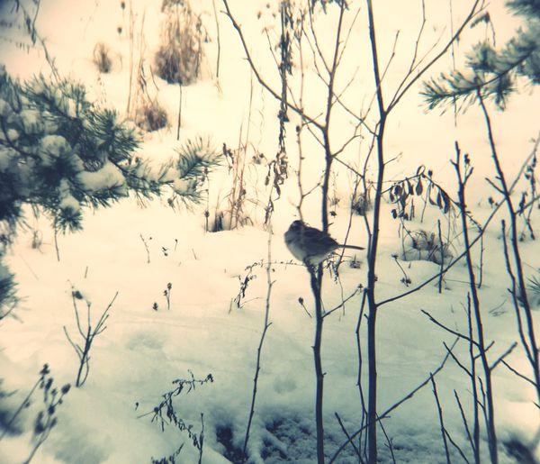 Bird in the winter Winter Bird Bird Winter Cold Temperature Snow Animal Themes Animals In The Wild Nature One Animal Shades Of Winter Shades Of Winter