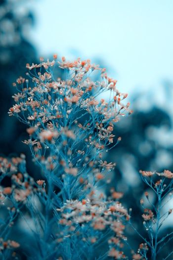 Close-up of flowering plant during winter