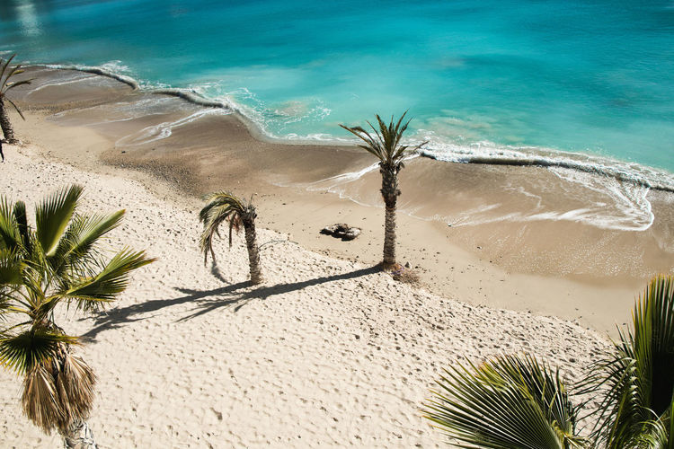 Landscape on the Mediterranean coast in Alicante, Spain Water Beach Land Sea Nature Sand Plant Day Beauty In Nature No People Sunlight Tropical Climate Tranquility Palm Tree Tranquil Scene Scenics - Nature High Angle View Growth Outdoors Turquoise Colored Coconut Palm Tree Palm Leaf Palm Tree Travel Palm