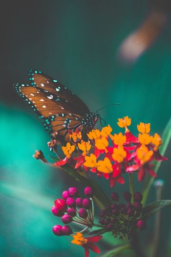 Flower Fragility Butterfly - Insect Beauty In Nature Nature One Animal Plant Animal Themes Freshness Insect Close-up Focus On Foreground No People Growth Animals In The Wild Flower Head Day Outdoors Pollination