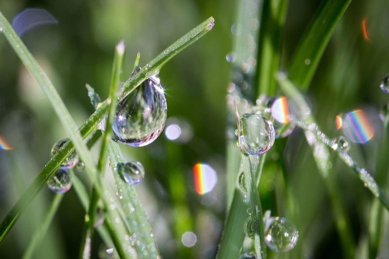 Dew Drop Macro Photography MorningDewdrops Beauty In Nature Close-up Drop Droplet Grass Purity Wet