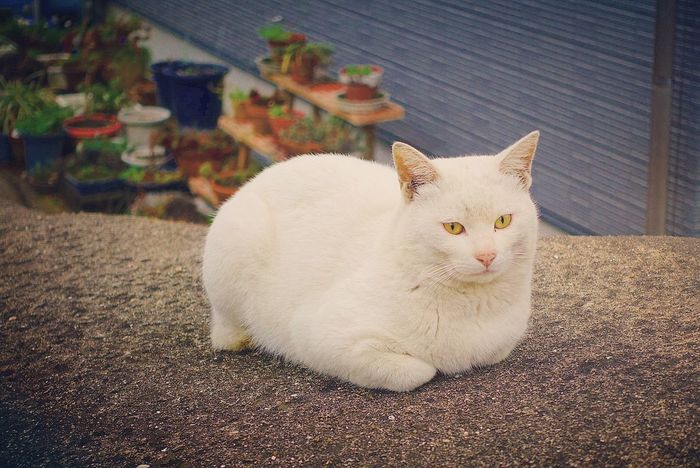 凛々しい✨ One Animal Pets Animal Themes Looking At Camera Animal Portrait No People Tabby Cat Day もち もちっ Taking Photos Cat♡ Hello World Cats のらねこ部 野良猫 猫 ねこ Cat Cute Photography White Zzz お餅