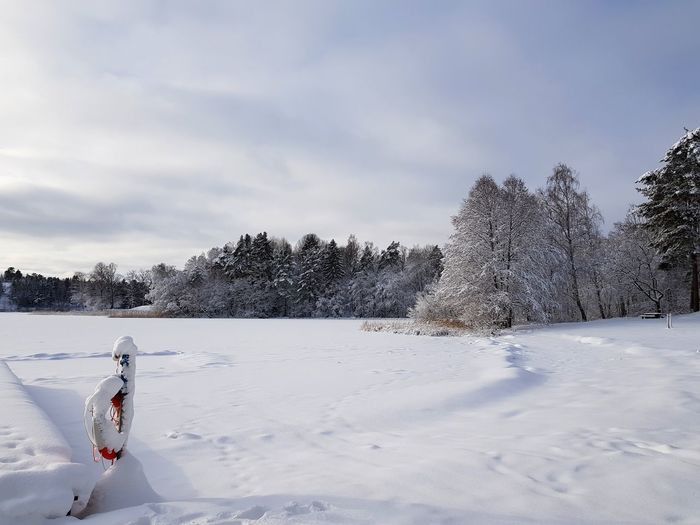 Lakeside Winter