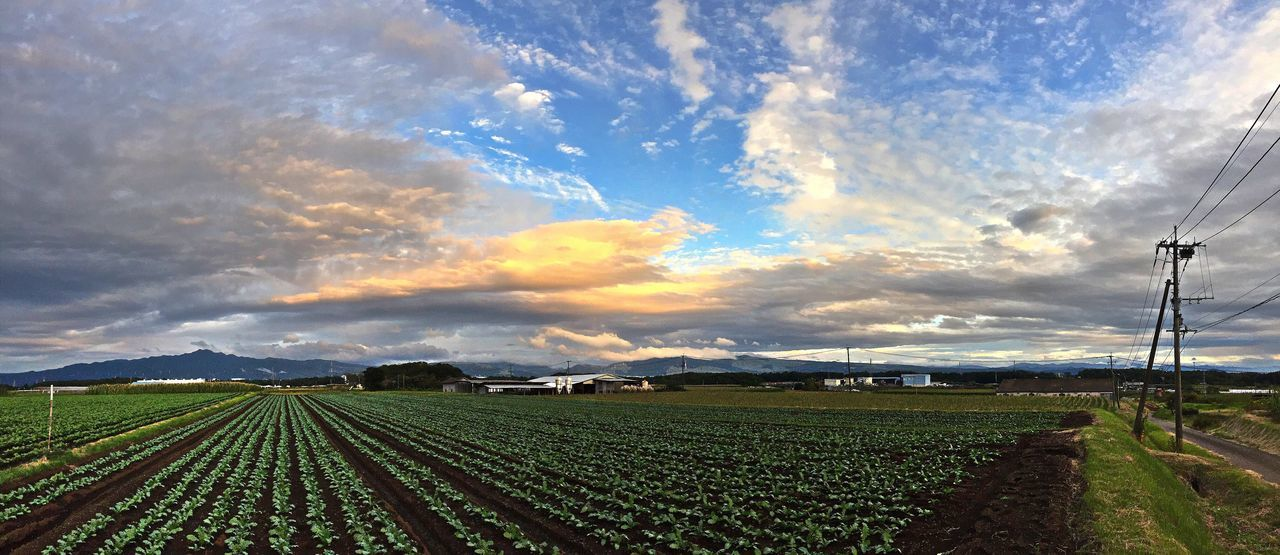 agriculture, field, farm, rural scene, sky, cloud - sky, nature, beauty in nature, landscape, growth, scenics, tranquility, outdoors, no people, day