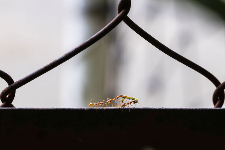 Close-up of ants on railing