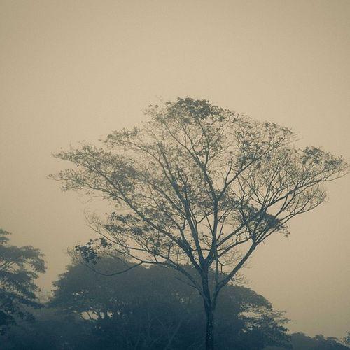 Hazy Harmattan mornings! Lagos Lekki Nigeria africa Sahara snapitoga
