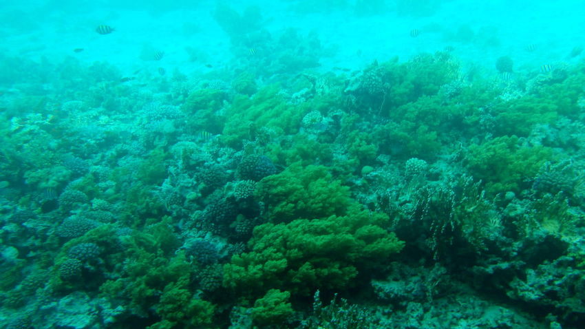 Beauty In Nature Blue Coral Coral Reefs Dahab Egypt Fish Nature Nature Pure Water Red Sea UnderSea Underwater