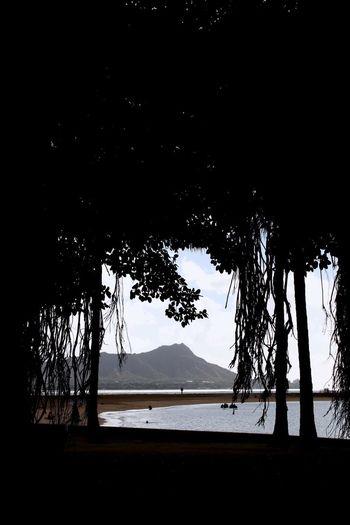 Tree Nature Beauty In Nature Tranquility Tranquil Scene Water Outdoors Beach Landscape Mountain Scenics Ala Moana Nature Diamond Head Diamond Head Crater Ala Moana Beach Park Sea banyan tree