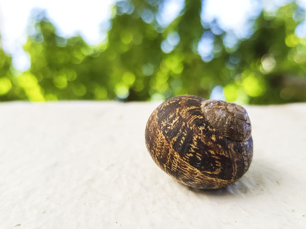 EyeEm Nature Lover Green Nature Nature Photography Snail Animal Themes Brown Close Up Close-up Closeup Detail Focus On Foreground Fragility Freshness Gastropod Minimalism Nature_collection No People One Animal Outdoors Snail Snailshell Snail🐌