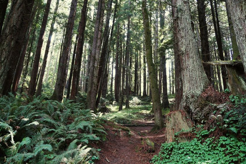 Taking Photos Check This Out Enjoying Life Hello World California Redwoods Nature Outside Photography Amazing Creation Tall Trees A Walk In The Woods