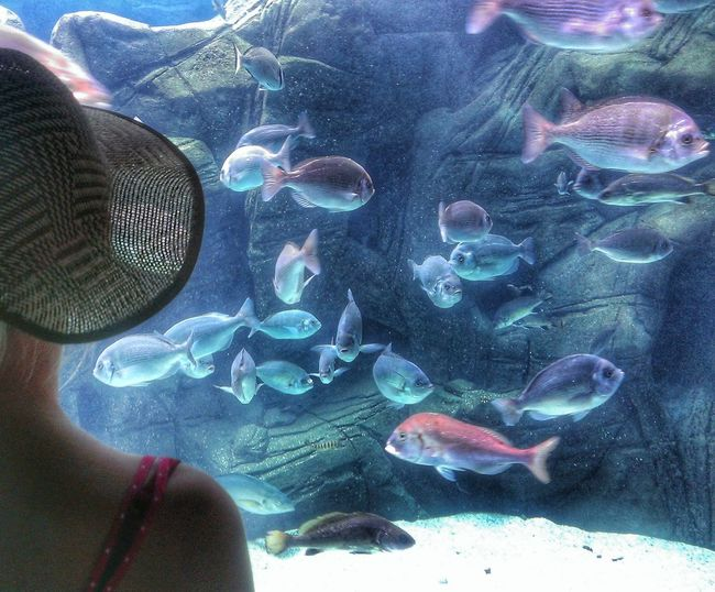 Water Fish Animal Themes Sea Life Close-up One Person Jellyfish Day Woman Blond Hair Blond Woman Hat Underwater Swimming UnderSea Large Group Of Animals Low Section Animals In The Wild Outdoors People Ocenário Lissabon