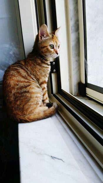 Crazy Cat Cat Kittycat Venere Me Love ♥ Details Home Sweet Home