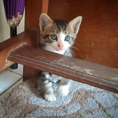 Domestic Cat Pets Looking At Camera Domestic Animals Animal Themes One Animal Feline Young Animal Cute Kitten Kitten Adorable Kitten<3 Adorable Kitten Pet Portraits