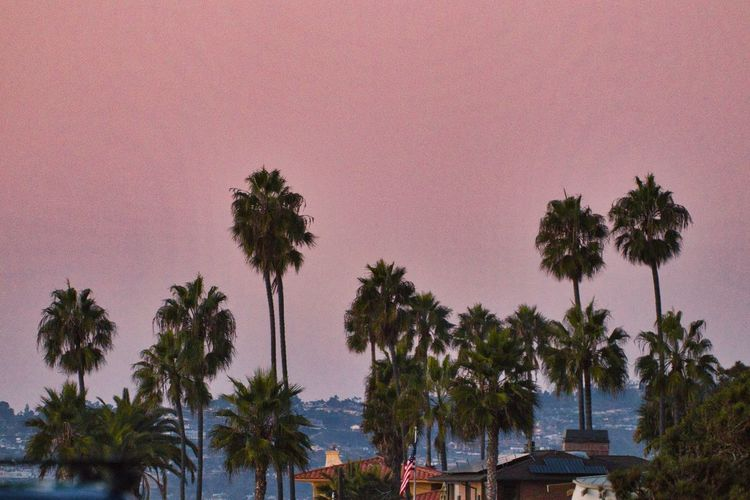 Palm trees and plants against sky during sunset