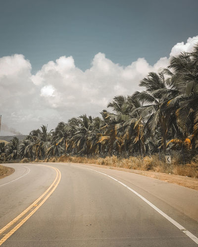 Pelas estradas do Gunga Photography Photography Themes Photographer Brazil Brasil Alagoas Praia Estrada Tree Road Sky Cloud - Sky Landscape Mountain Road Winding Road