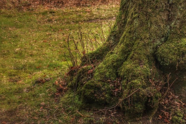 Big Foot was here! 🐾 EyeEm Nature Lover EyeEm Gallery EyeEmNewHere Big Foot Was Here...maybe. Eye4photography  Forest Grass Growth Nature No People Outdoors Tree Silence Of Nature Walking Around Taking Photos See What I See ForTheLoveOfPhotography EyeEm Best Shots - Nature Been There. Tranquility Nature On Your Doorstep Nature Photography Go For Green 💚 Walking Around Taking Pictures Beauty In Nature