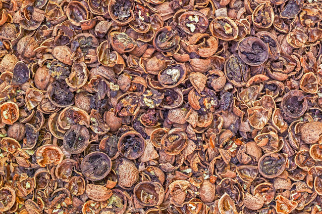 Cracked nuts infected with mold Bad Condition Mold Nuts Backgrounds Bad Beauty Close-up Corupted Cracked Day Decayed Defaced Full Frame Infected Mildew Mold Food Mold Mould Mouldy Nature No People Nuts And Seeds Nuts On The Ground Nutshell Outdoors Photograph Putrid Rotten
