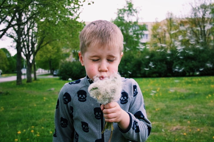 Close-up of boy holding dandelions