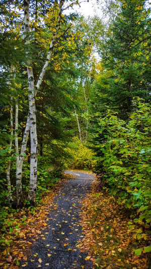 Nature No People Outdoors Beauty In Nature Tree Backgrounds Fall Beauty Half The World Away EyeEm New Here Creativity Has No Limits EyeEm Selects The Week On EyeEm Just Passing Through EyeEmNewHere Oh Canada! Green Green Green!  Multi Colored Colour Everywhere Fall Is Here. Lines & Curves Scenics Landscape Beauty In Nature Tree Nature