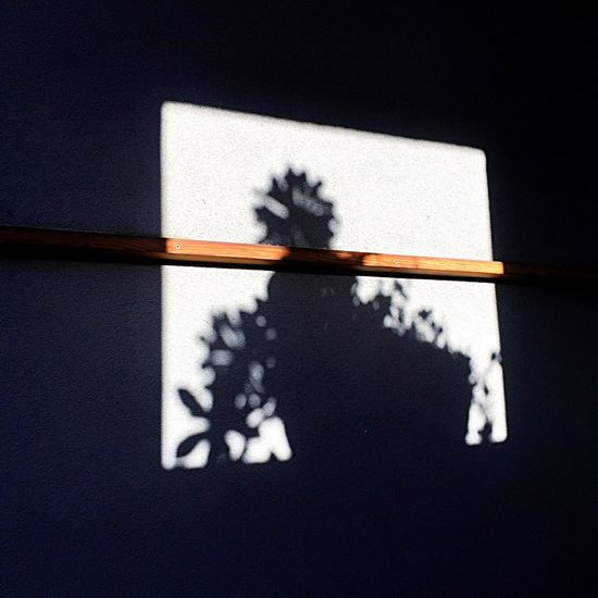 Light And Shadow Plant Shadow Open Edit Succulents