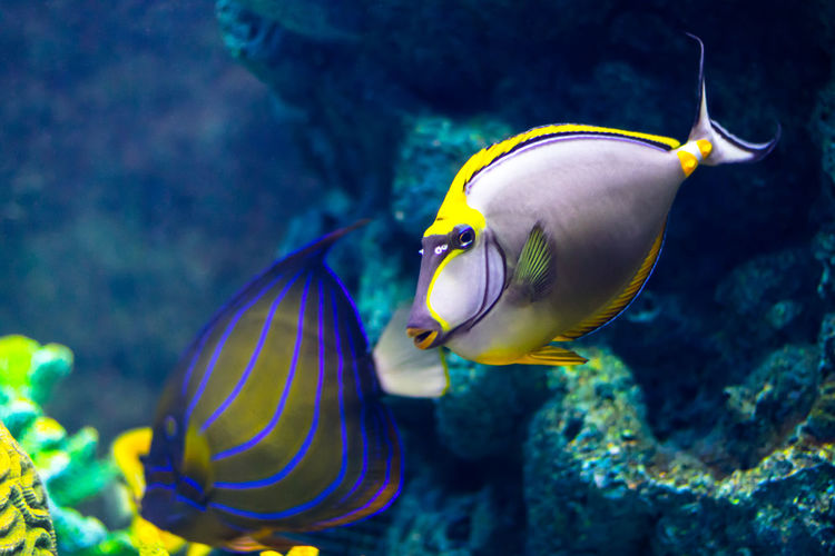 Extremely bright and colorful tropical sea fish in the aquarium