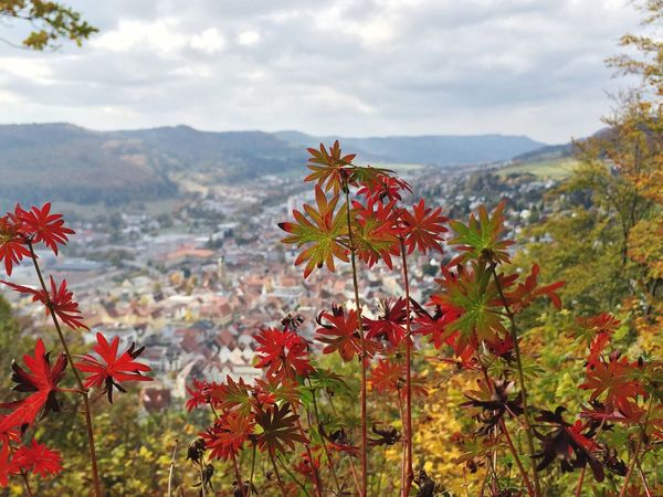 Albstadt Deutschland GERMANY🇩🇪DEUTSCHERLAND@ Nice Day Plant Beauty In Nature Mountain Range Town City Cityscapes Bestoftheday Red Flower Plants IPhoneography Iphoneonly Check This Out