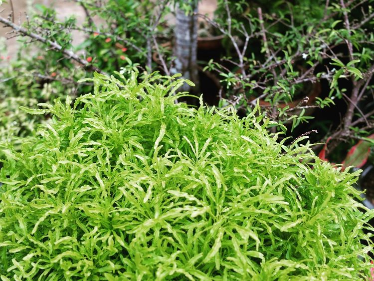 Green Collection Leaf Green Color Nature Plant Growth Outdoors No People