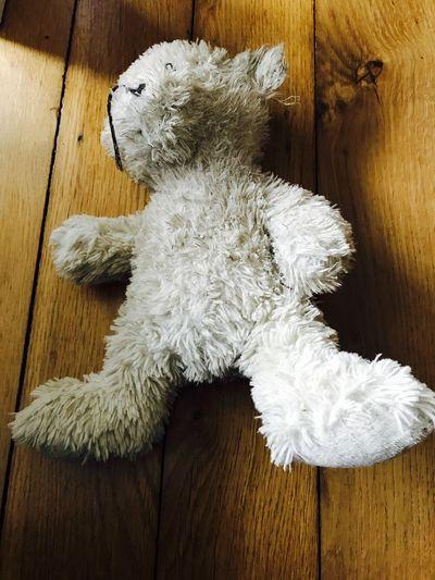 High angle view of white teddy bear on hardwood floor