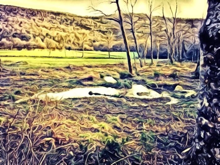 Wonderland Hanging Out Exploring In The Forest Walking The Dog Beautiful Nature Paint Edit