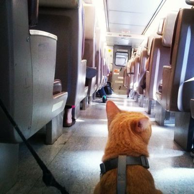 Heading back to Brooklyn! Simonbo Catsontrains