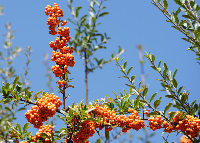 Low angle view of orange flowering plant against sky
